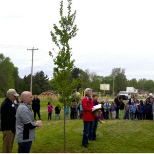 Celebration of Arbor Day